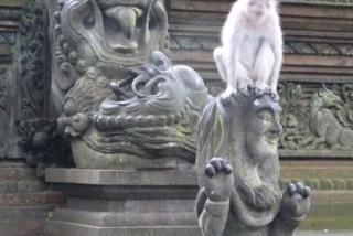 ubud_suma_majmuna_16